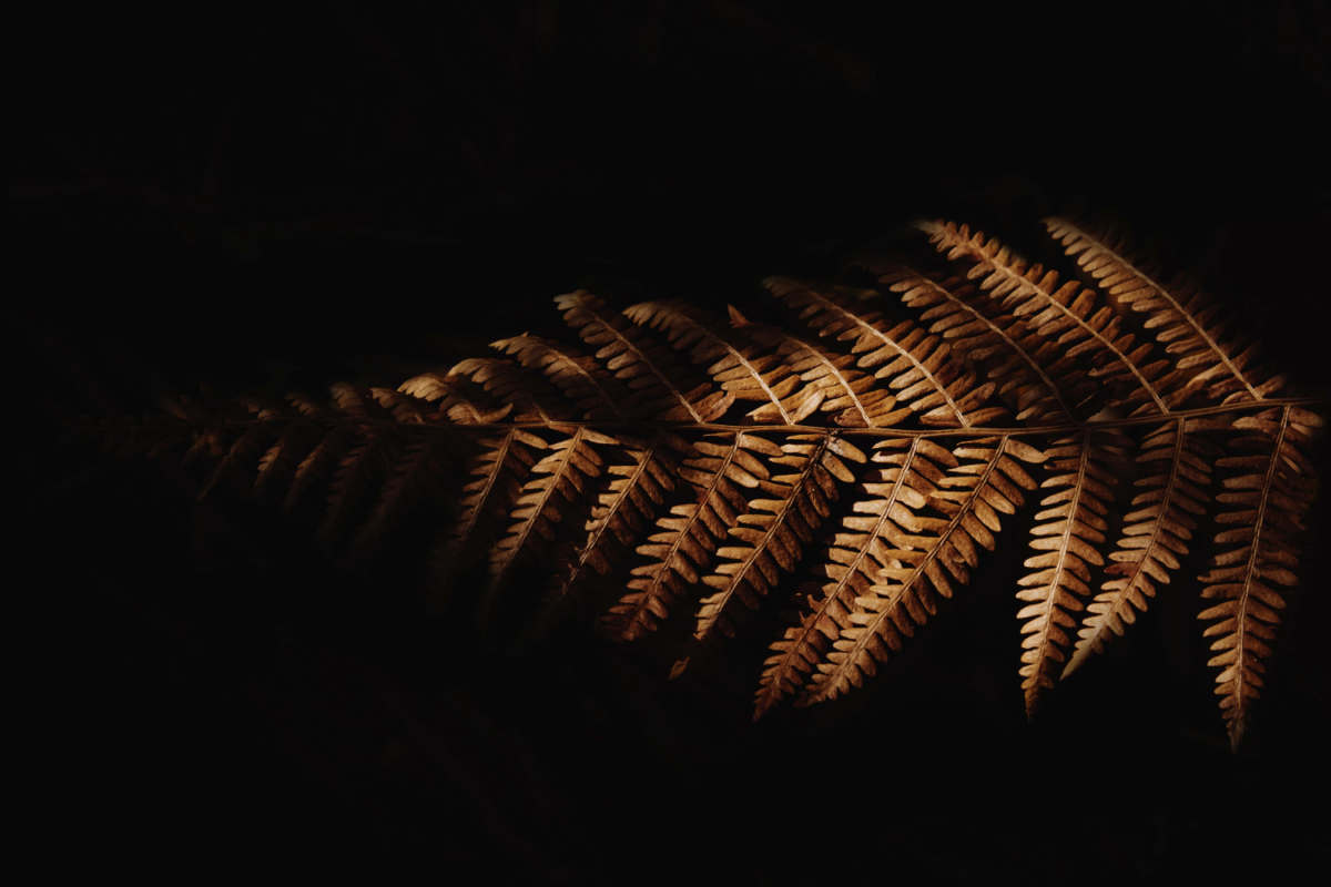 paproć na ciemnym tle